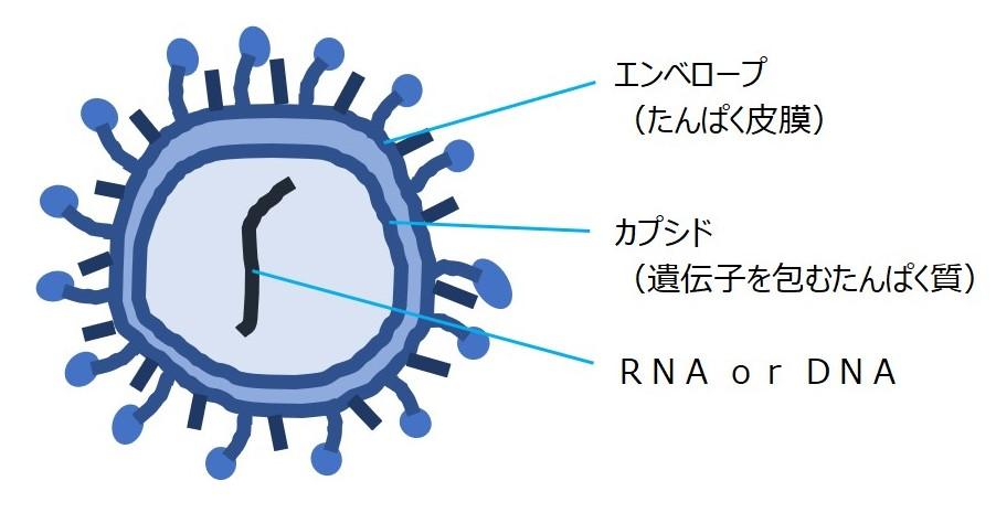 ウイルス の コロナ 新型 感染 手引き 診療 症